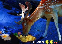 Last Straw Deer