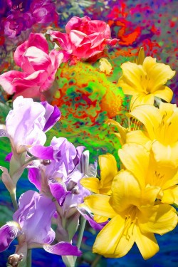 WildFlowers - Carnations