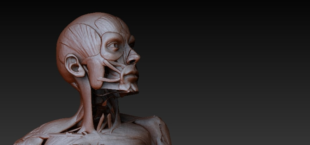 zBrush Anatomy and 3D Print