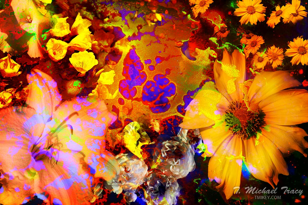WildFlowers 2014 Series